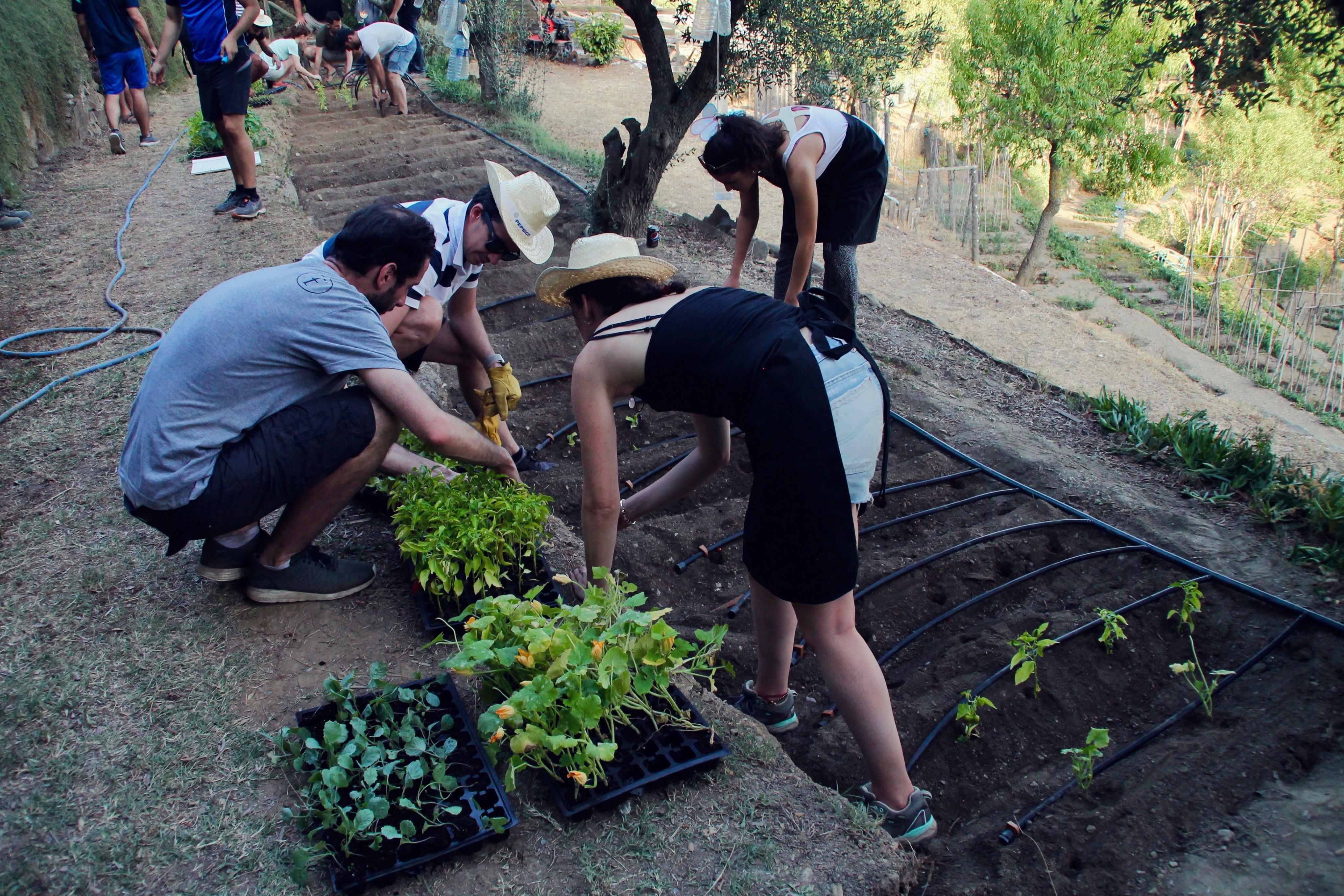 Organic garden Social_Teambuilding