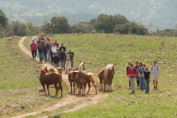 outdoor event horses in natural parks