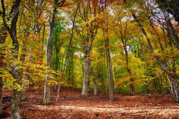 Montseny outdoor forest autumn