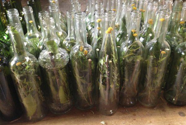 Ibiza team building aromatic herbs