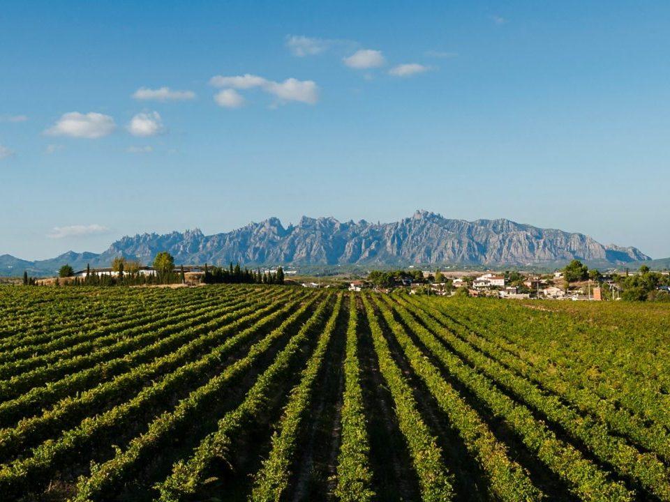 Outdoor meeting vineyards Penedes
