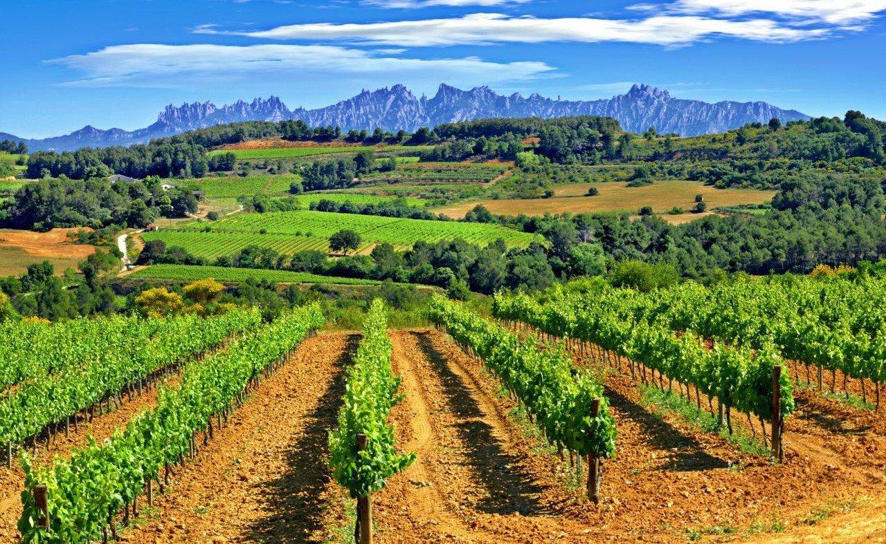 outdoor experiences Penedes vineyards